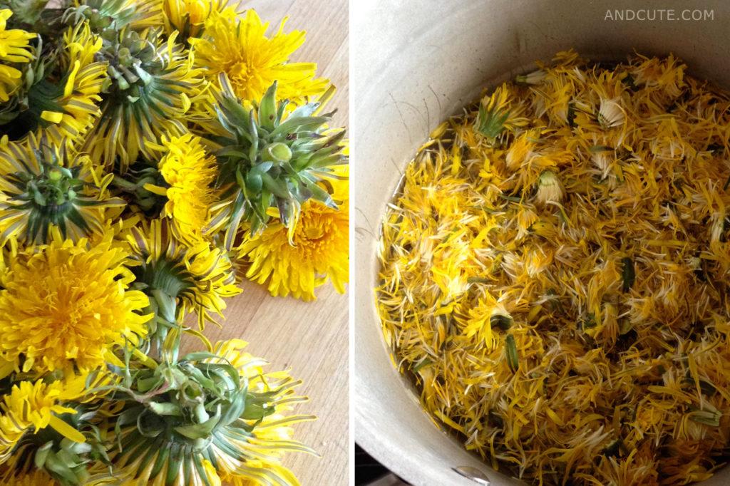 Making of Dandelion Honey
